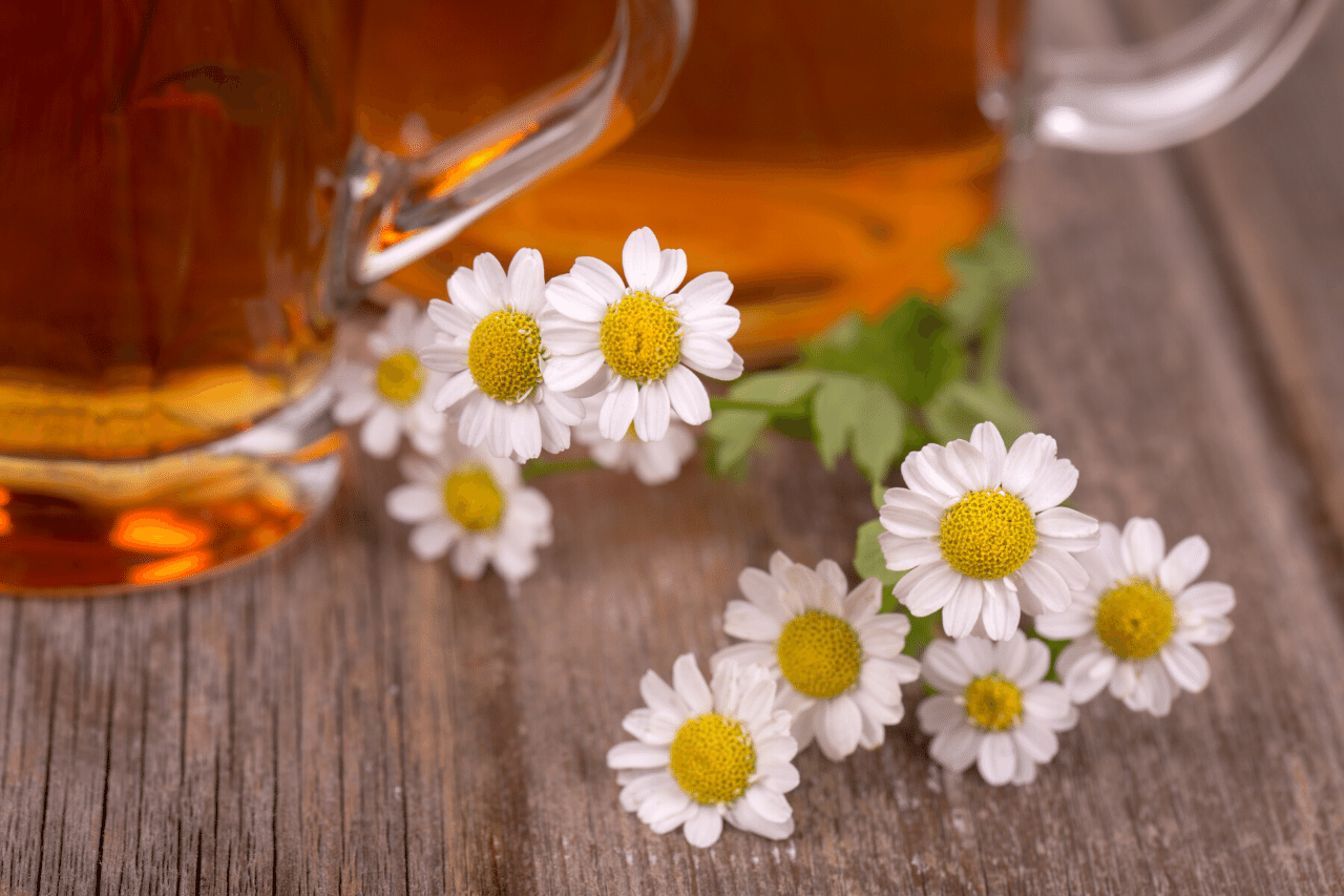 Kamillentee Wirkung, Anwendungsgebiete, Vorteile und Nebenwirkungen